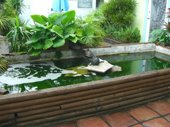 Angelfish Inn: turtle pond out the door/window of room 11