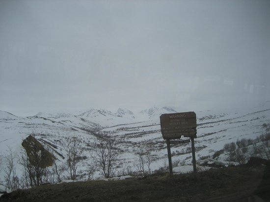 Denali National Park Campgrounds : Denali in snow with bear-chewed sign