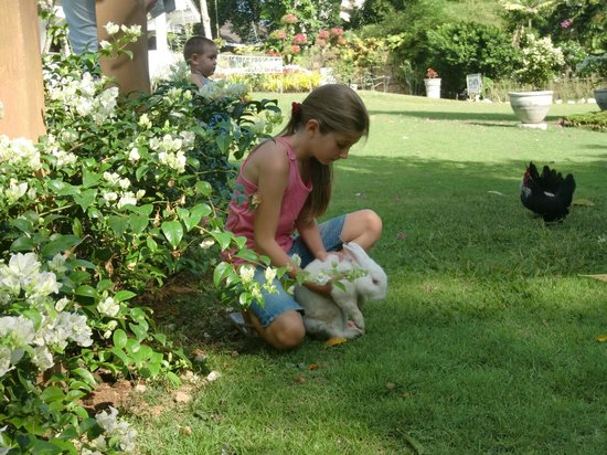 Thavorn Palm Beach Resort: кролики