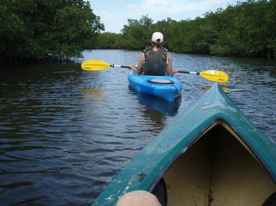 A-Bayview Bed and Breakfast: Kayaking through the mangroves