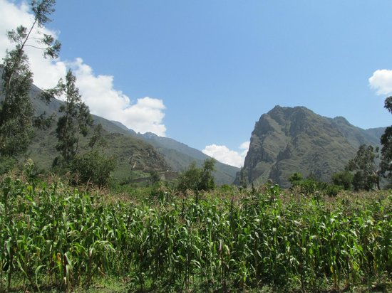 El Albergue Ollantaytambo: Vista de Ollantaytambo y los maizales desde el hotel.
