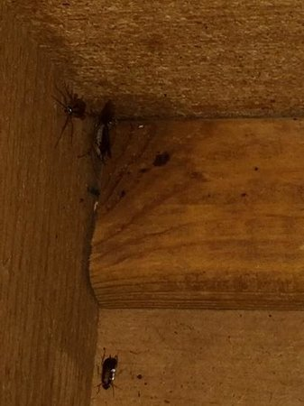 Neptune Hollywood Beach Hotel: Roaches in our cabinets, room 201.
