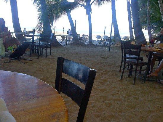 La Palapa : Restaurant