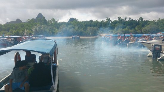 Langkawi Mangrove Tour - Day Tours