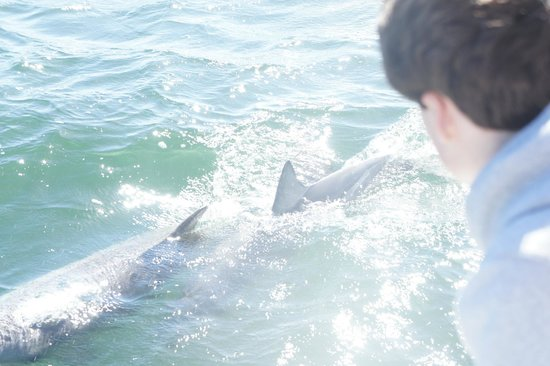 Kangaroo Island Marine Adventures: dolphins alongside the boat