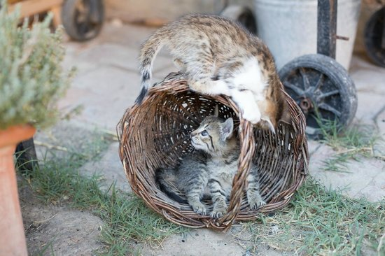 Agriturismo Cretaiole di Luciano Moricciani: Playful kittens at the farmhouse