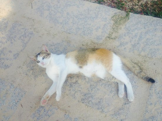 Mai House Resort: Friendly cat on the grounds