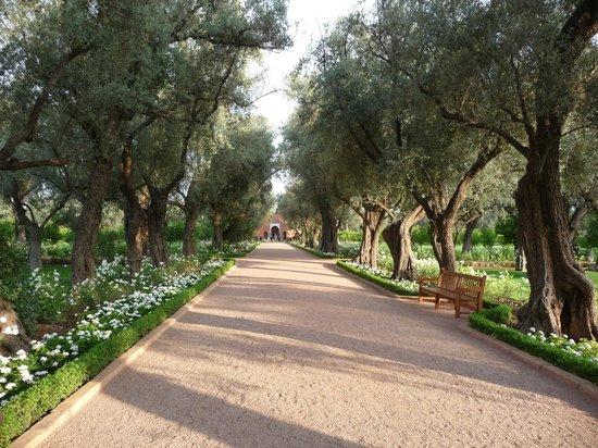 La Mamounia Marrakech: jardin