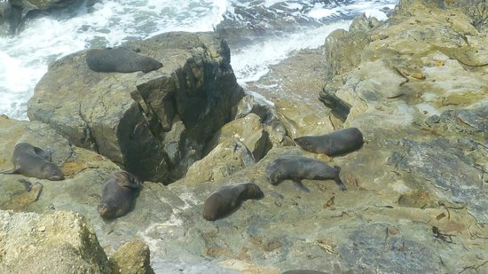 Private Discovery Day Tours : Seals at Shag Rock