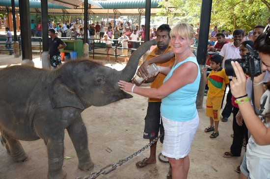 Pinnawala Elephant Orphanage : feeding time