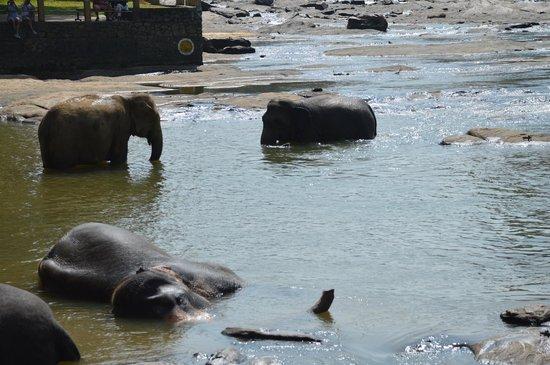 Pinnawala Elephant Orphanage : leisure time