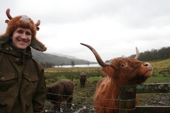 The Hairy Coo - Free Scottish Highlands Tour : Hairy Coo's