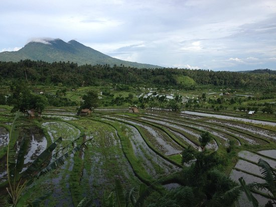 Alila Manggis: Local Rice Paddies