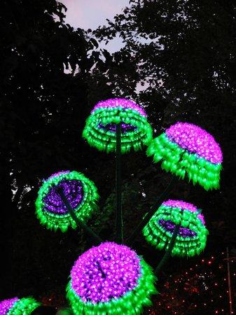 Hunter Valley Gardens: Christmas lights (Dec-Jan)