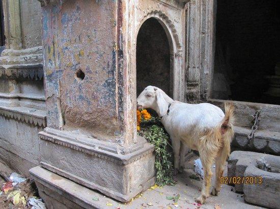 Ganges River: Утренняя трапеза