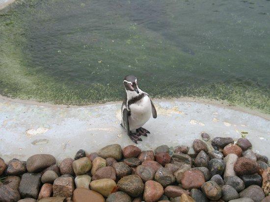 Copenhagen Zoo: Mr.Pinguino