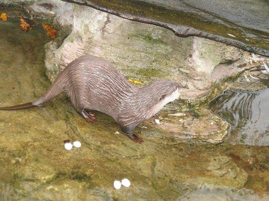 Copenhagen Zoo: La Lontra