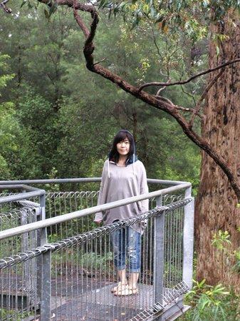 Tree Top Walk: Noriko on the corner