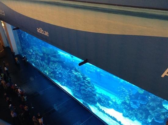 The Dubai Mall : aquarium