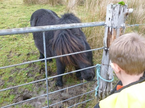 Inverness  Day Tours: Feeding the pony