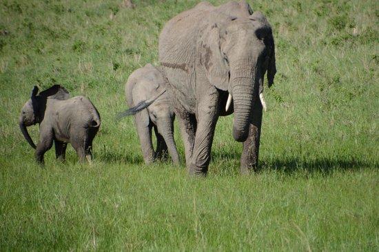 Porini Amboseli Camp: Elephants