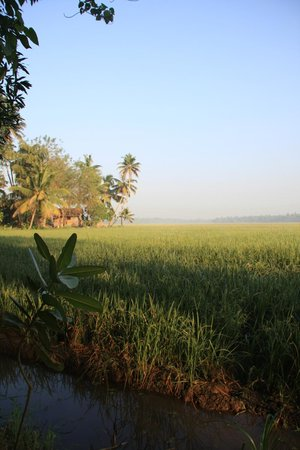 GK's Riverview Homestay: Looking out over the rice paddy