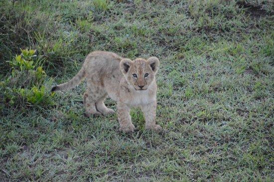Porini Mara Camp: cutie