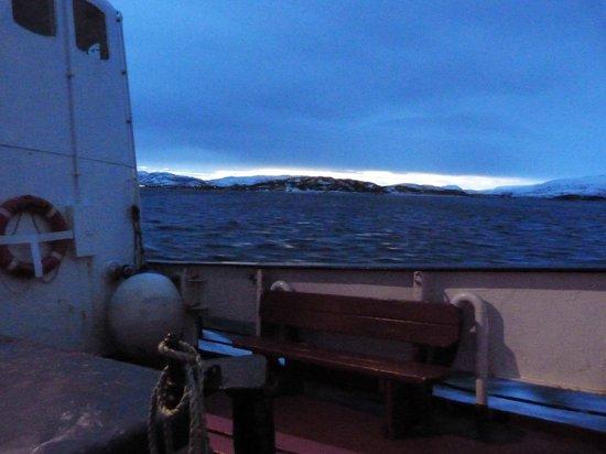 Arctic Whale Tours: l'horizon