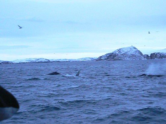 Arctic Whale Tours: vue du bateau