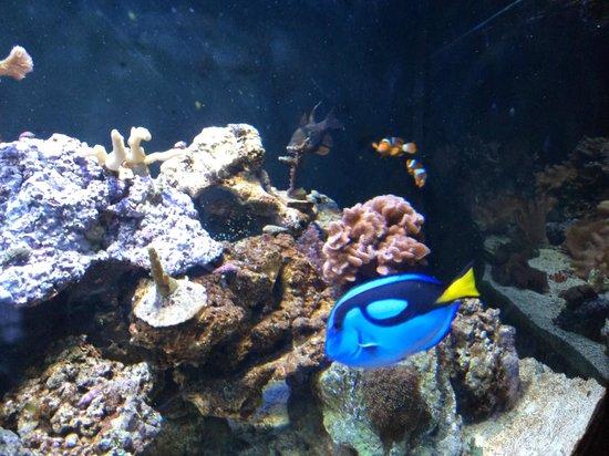 Picture of Sao Paulo Aquarium, Sao Paulo - TripAdvisor