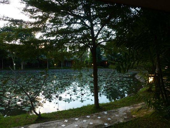 Phowadol Resort and Spa : Blick aus dem Zimmer