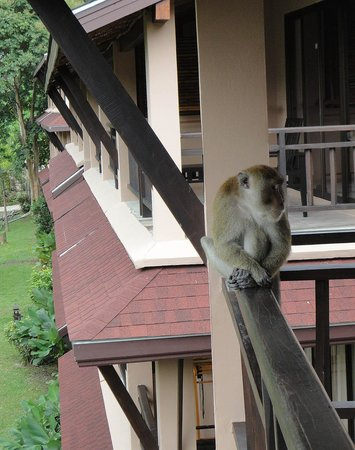 Railay Princess Resort & Spa: Beware of the monkeys ;)