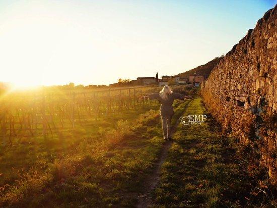 Villa Monteleone: Road along the grapes of Monteleone