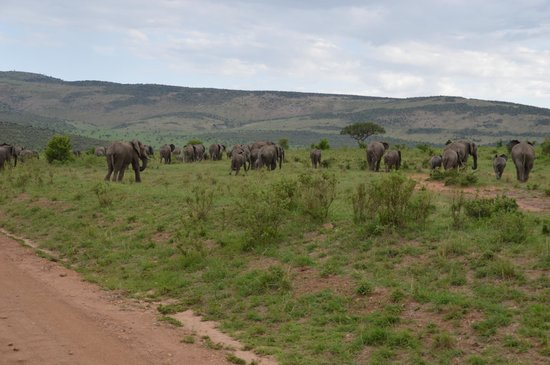 Oldarpoi Mara Camp : Elephants