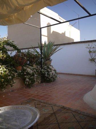 DarZahia: Roof terrace