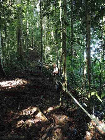 Borneo Rainforest Lodge: Example of trekking route to viewpoint