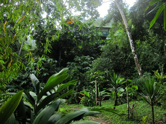 Osa Rainforest Rentals: view from the river looking up toward the house
