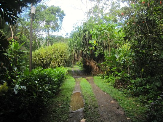 Osa Rainforest Rentals: scenic and rural road leading to the house