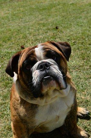 Estancia La Quinta: Gutierrez, la mascota del lugar