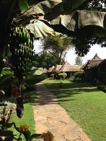 Lake Duluti Serena Hotel: Gardens and walk to the villas