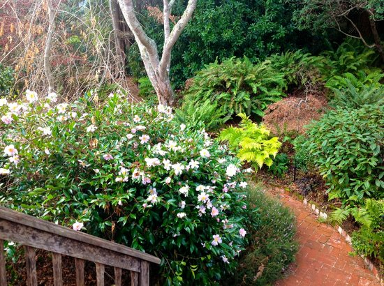 Inverness Secret Garden Cottage: Here is a photo from the cottage porch of a white/pink blooming camelia (I think).