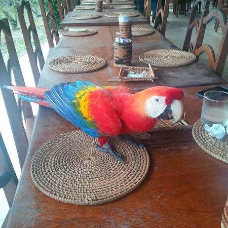 Amazon Ecopark Jungle Lodge: Macaw at Breakfast