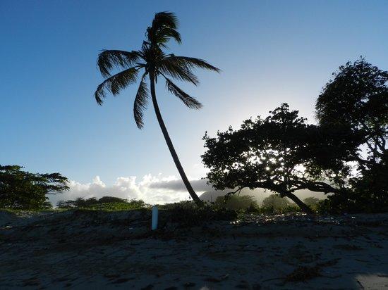 Be Live Collection Marien: Palmier près de la plage