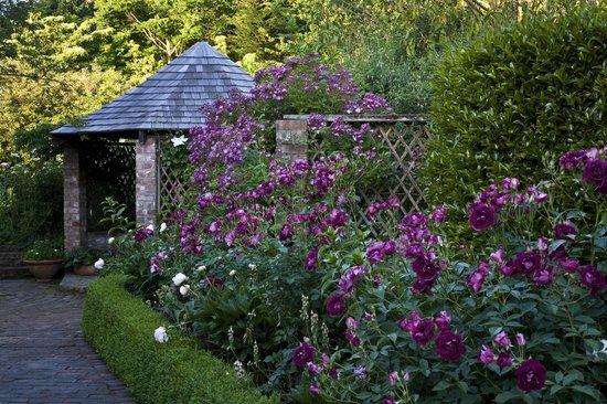 Frensham Gardens: Towards the summer house