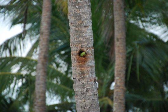 Coconut Island Cabanas and Restaurant : Birds everywhere!
