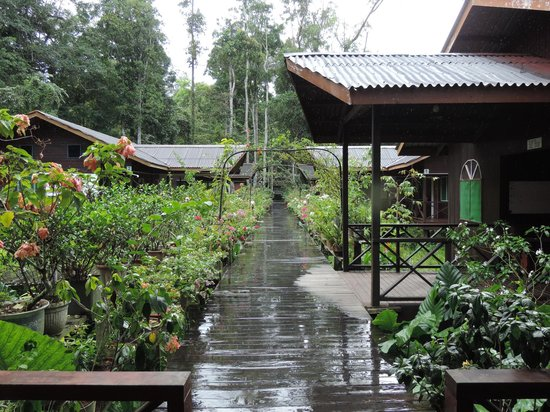 Abai Jungle Lodge : Accomodation blocks