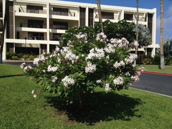 Mauna Lani Bay Hotel & Bungalows : Front of the hotel