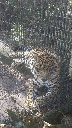 Hattiesburg Zoo : our favorite part!