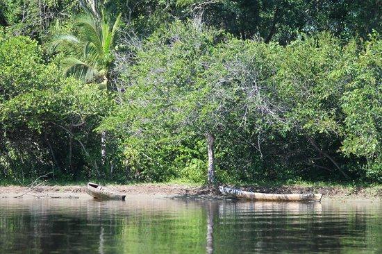 Coco Tours Honduras: Vegetación