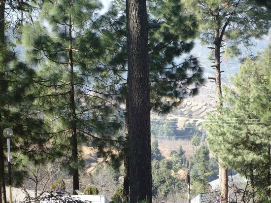 Hotel Mamleshwar (HPTDC): view from room